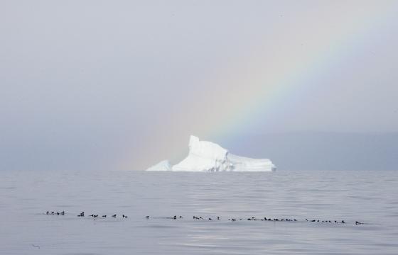 Maisema arktisesta Pohjois-Grönlannista, polaarieskimoiden maasta Thulesta, jonne globaalin (ilmaston)muutoksen arvioidaan vaikuttavan ehkä kaikkein voimakkaimmin. Kuva: Sauli Herva